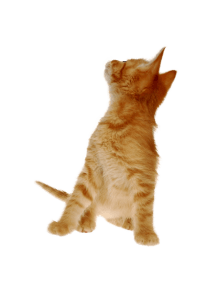 cats1-300