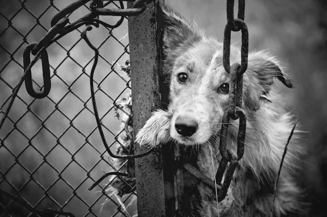 「Animal Abuse」の画像検索結果