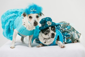 Lucy and Holly in dresses designed by Lola & Pooch, and hats designed by RaggDogDuds. Nina Parker Photography