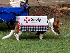 "Doggy Con, Peaches as ""Grady Ambulance,"" BEST IN SHOW"