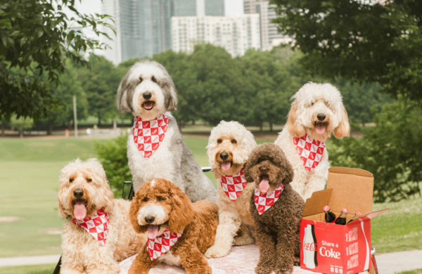 That Dood Squad® is the coolest crew in Atlanta. The dogs and their moms often work with brands, such as pet bandana companies, for photoshoots.