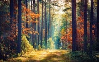 nature - Stress Management: Healthy Tips To Reduce Stress