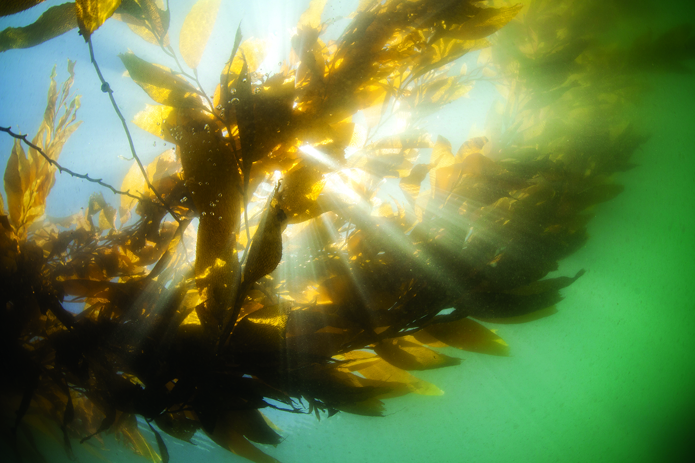 5 reasons why seaweed sustainability is important!