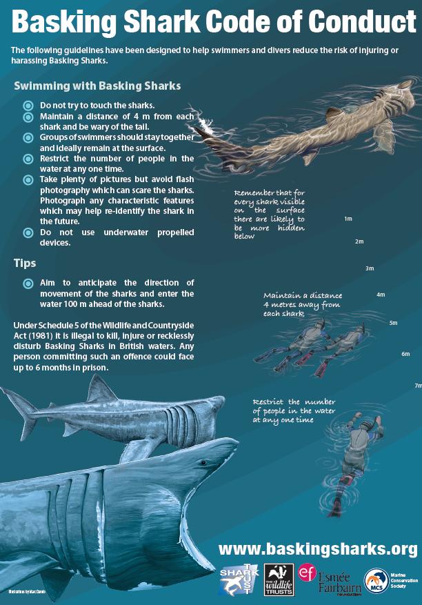 basking shark wildlife watching atlantic scuba