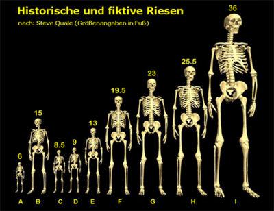 """Abb. 1 Ein Größen-Vergleich diverser (vermutlich) """"echter"""" und (vermutlich) """"falscher"""" Riesen aus Mythologie und """"archäologischen"""" Berichten. (Graphik: nach Steve Quale)"""
