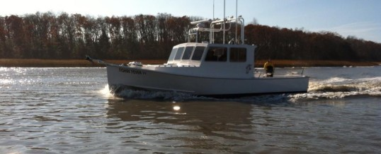 Fishin' Fever – 31′ JC Downeast & 38′ Calvin Beal