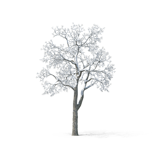 Deciduous Trees Collection PNG Images & PSDs for Download