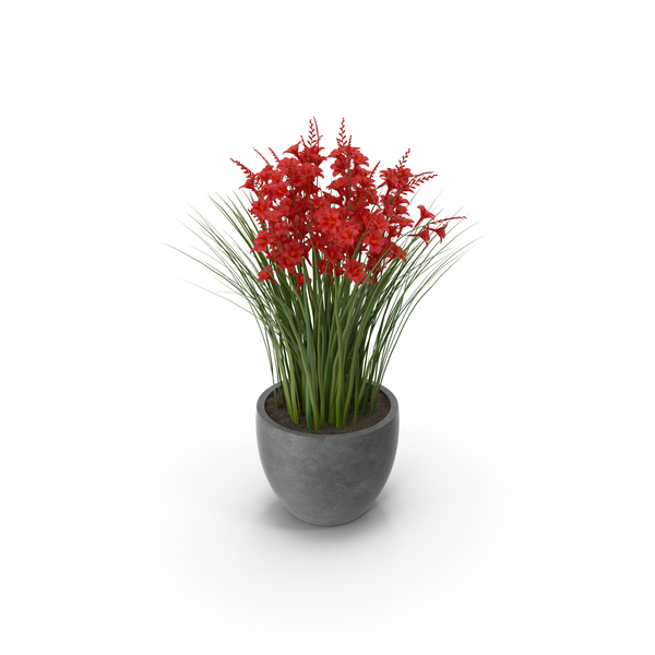 Crocosmia in Pot PNG Images  PSDs for Download