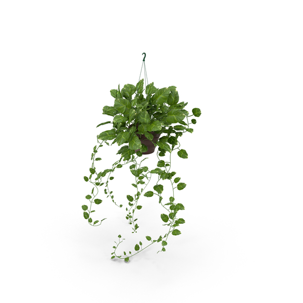 Best Indoor Green Plants