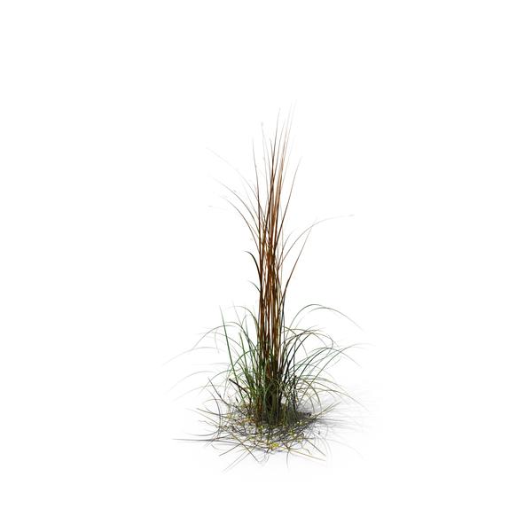Giant Miscanthus PNG Images & PSDs for Download