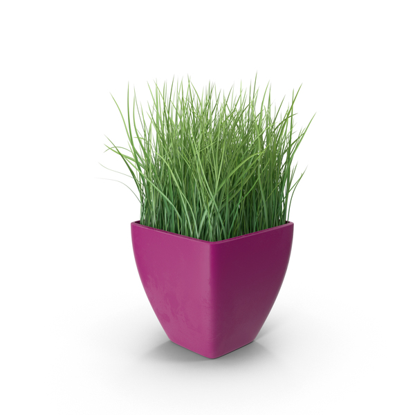 Grass In Purple Planter PNG Images Amp PSDs For Download PixelSquid S111399952