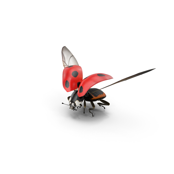 Ladybug Flying PNG Images  PSDs for Download  PixelSquid