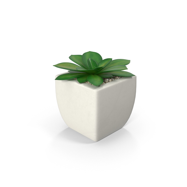 Potted Succulent Plant PNG Images  PSDs for Download