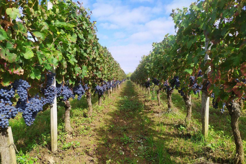 Bordeaux-winery-tasting