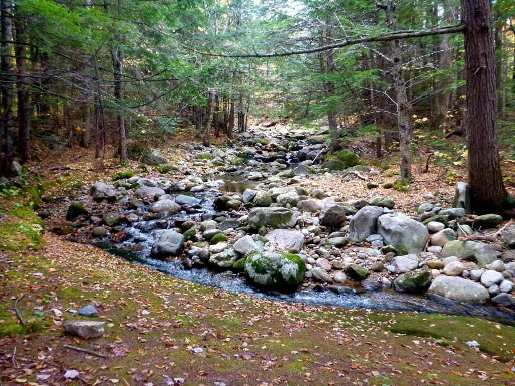A rocky stream flows through a green forest.