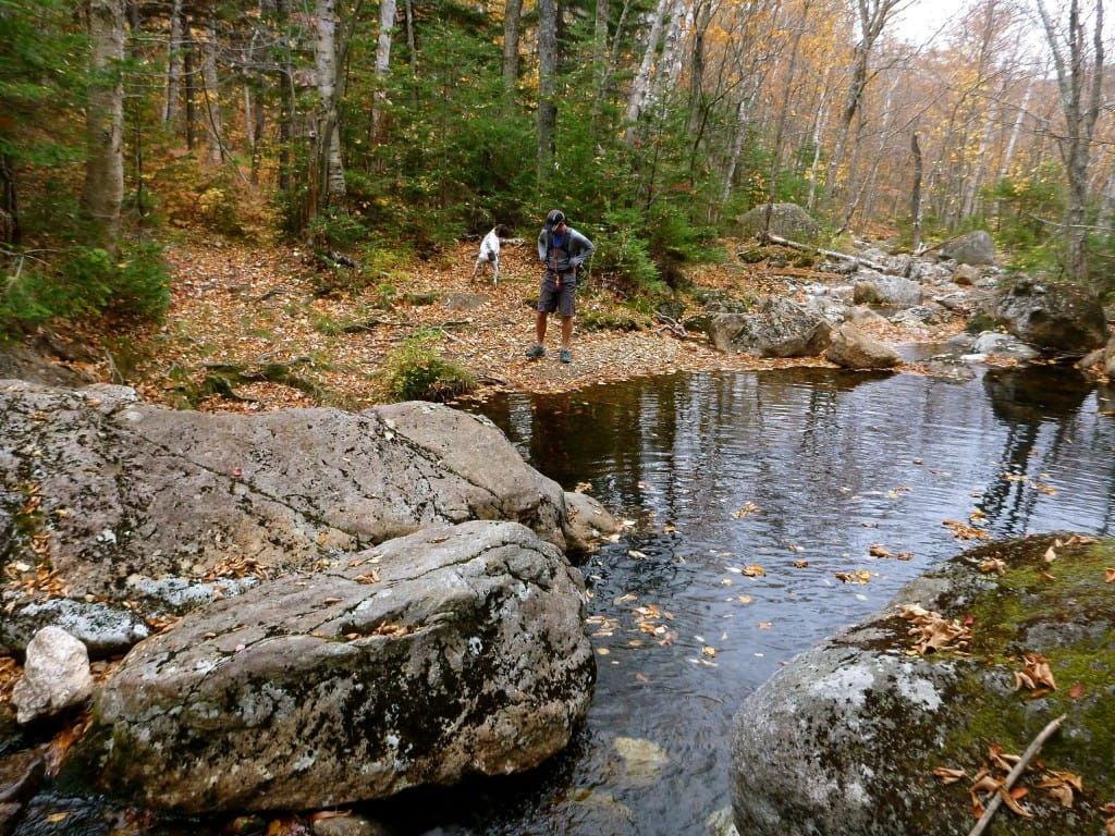 A hiker stands next to a stream that flows through a forest