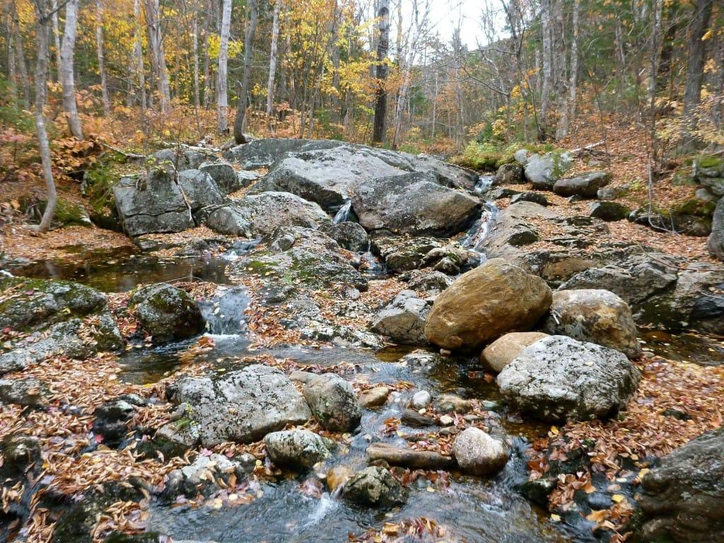 A rocky stream flows through a forest.