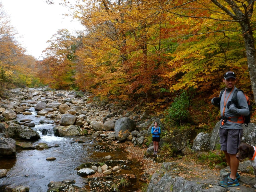 Hikers stand next to a rocky stream that flows through a forest.
