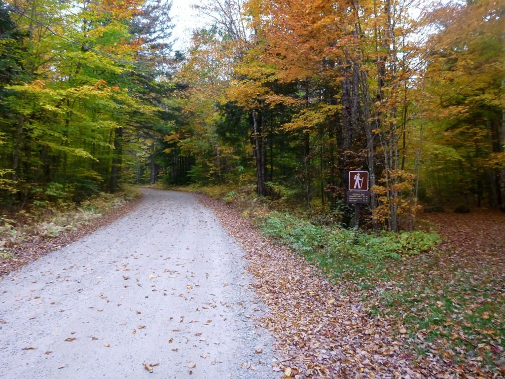 A hiker stands next to a gravel road that disappears into green and yellow trees.