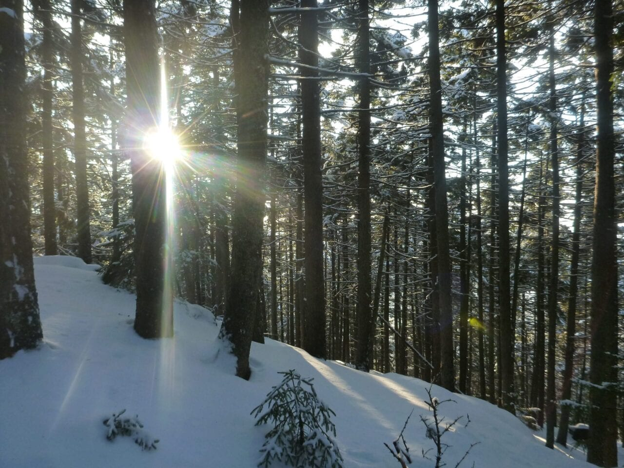 Sun shines through trees in a snowy forest.