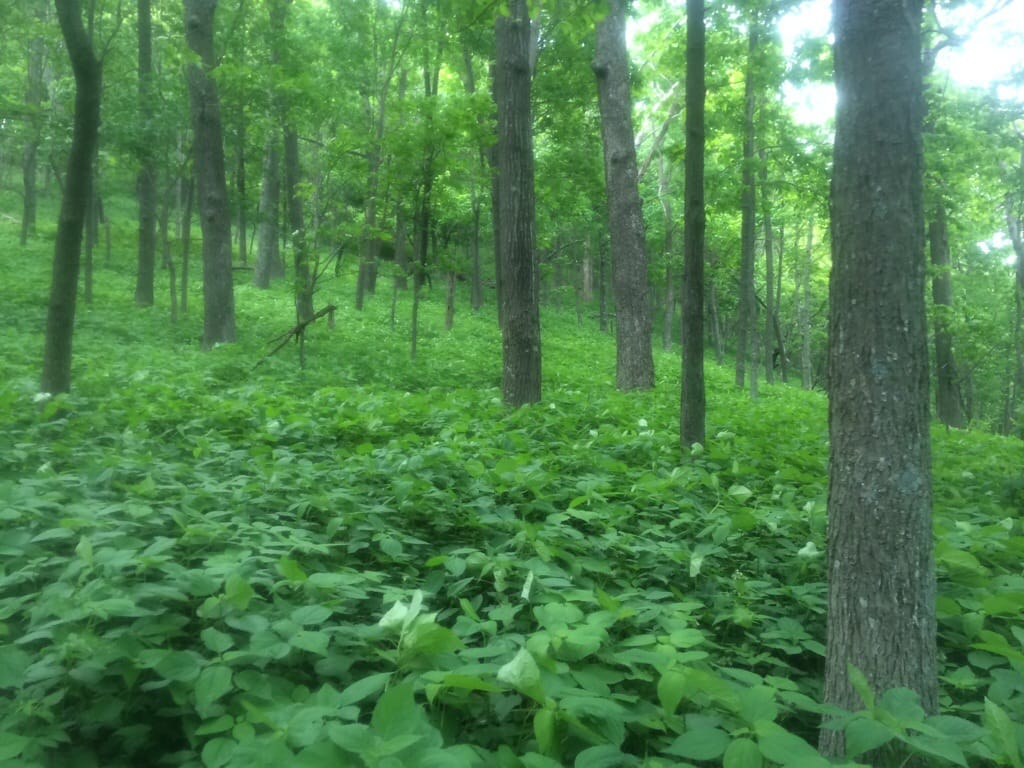 A covering of green plants blankets everything in this forest on the Appalachian Trail.