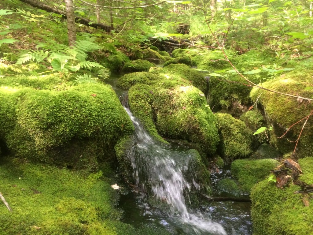A small waterfall flows through mossy rocks.