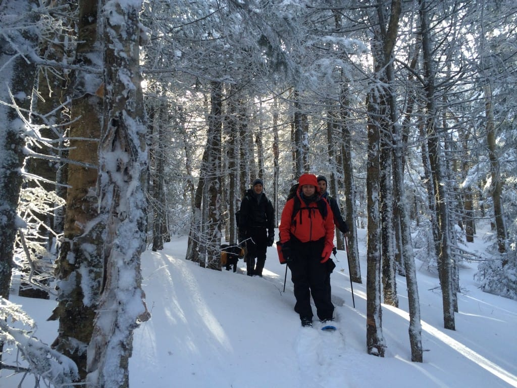 A group of hikers walk through a snowy forest.