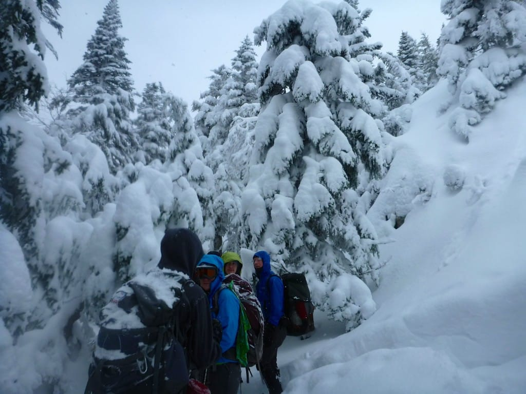 A group of hikers stand in a snowy forest.
