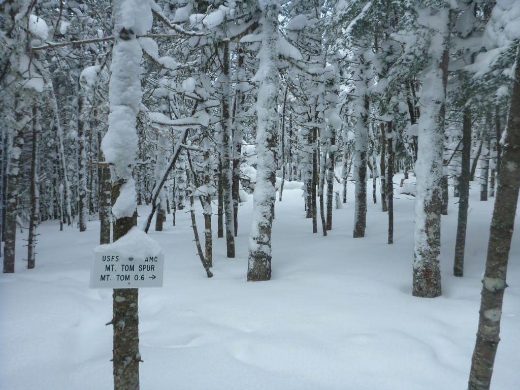 A sign stands in front of a snowy forest.