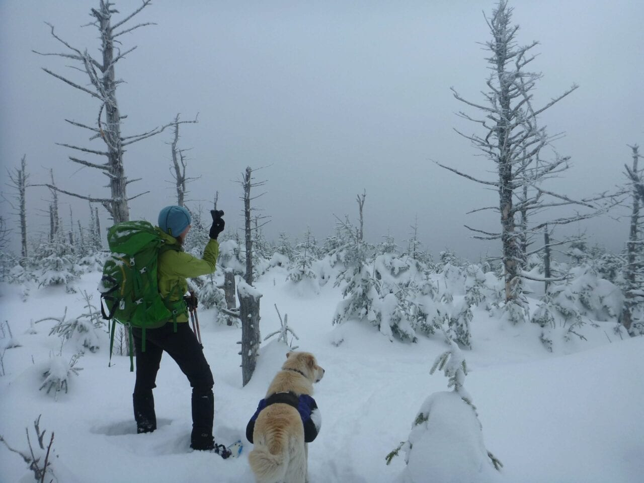 A hiker and a yellow labrador look out at a bbank of fog and snow-covered trees.