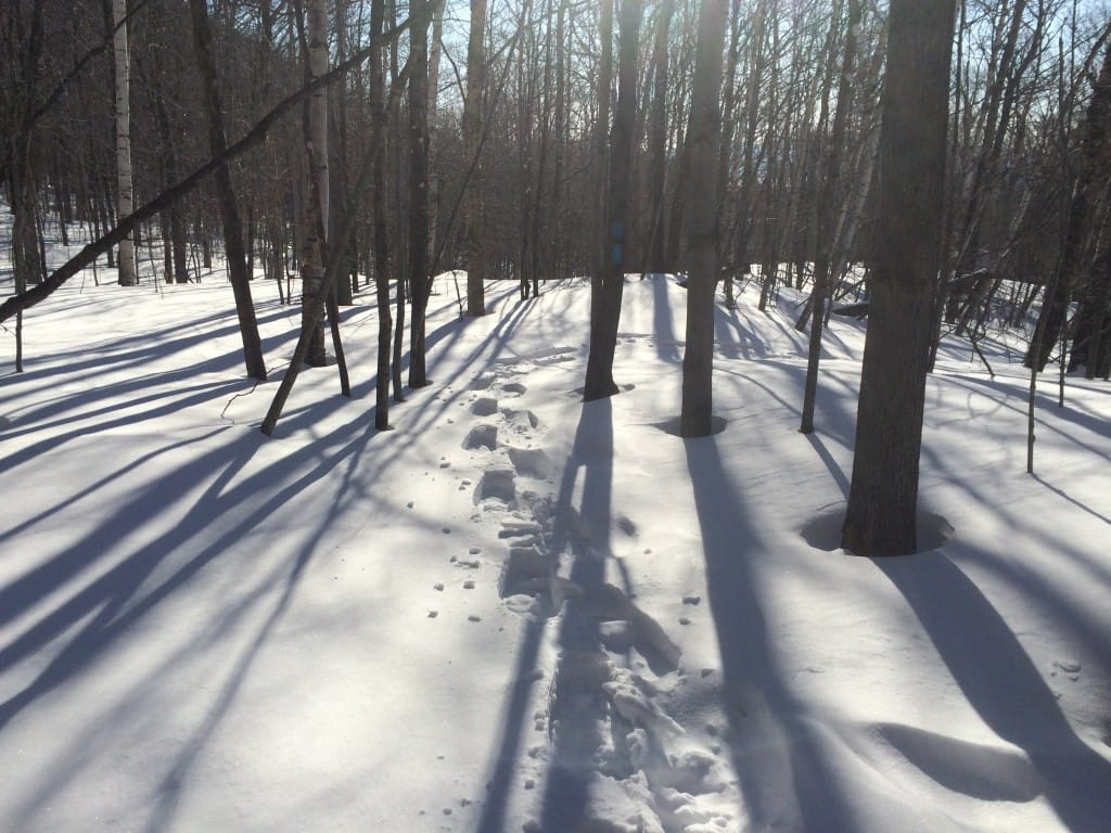 Footprints travel through a bright, snowy forest.