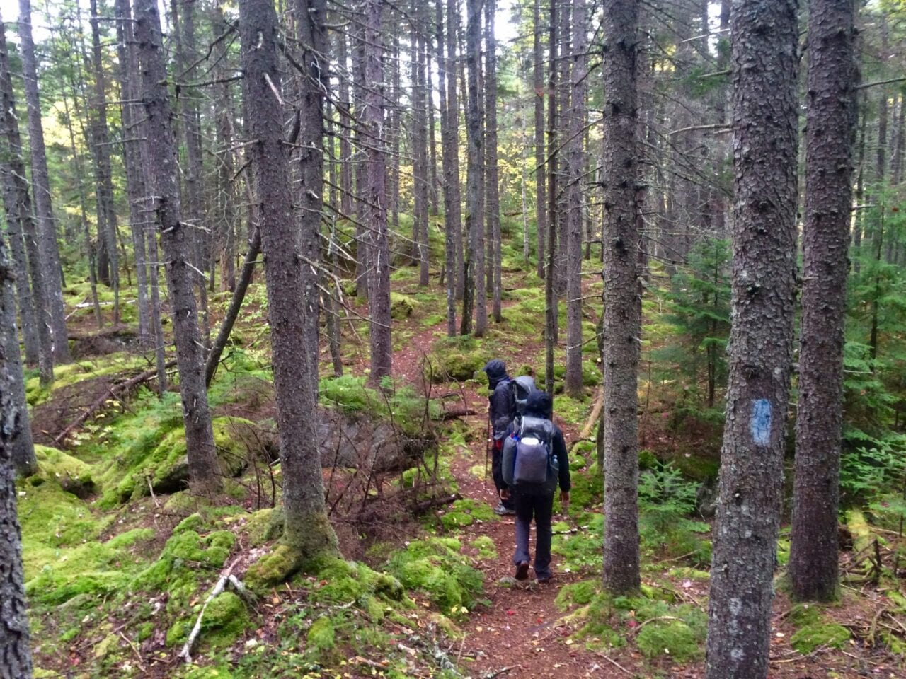 Hikers move down a trail through a mossy forest.