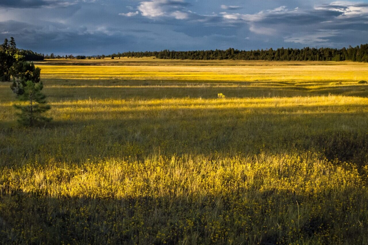 A field is lit with a golden yellow glow.