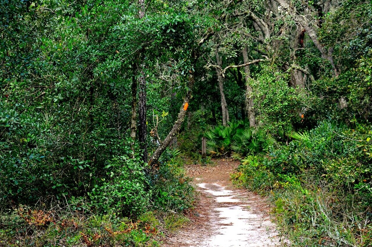 A sandy trail travels into a dense green forest.