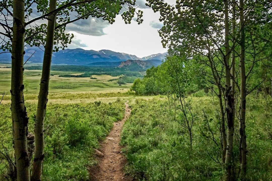 A trail winds through a green meadow with rocky mountains in the background.