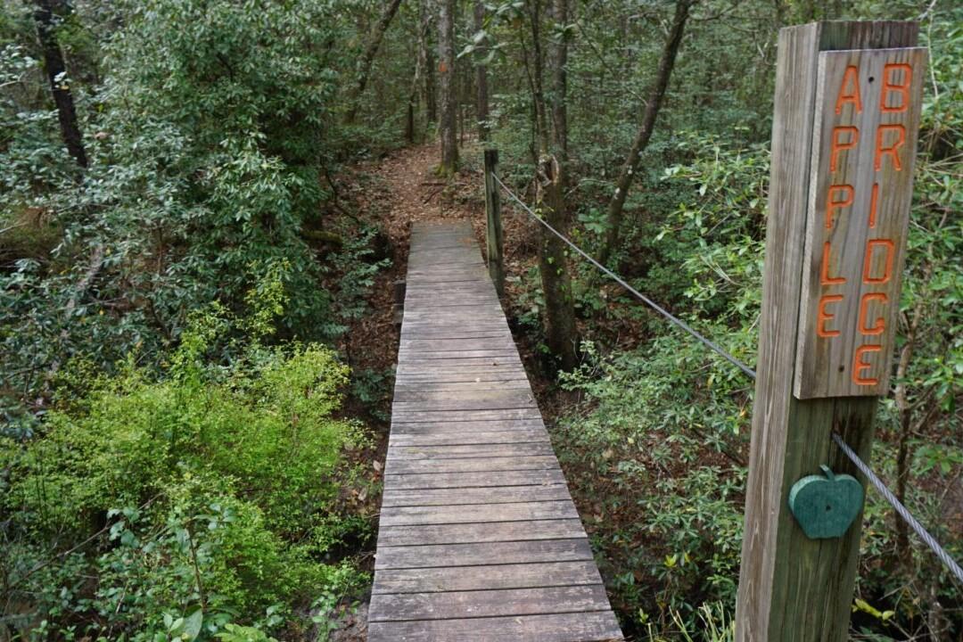 A bridge crosses over a creek through a green forest.