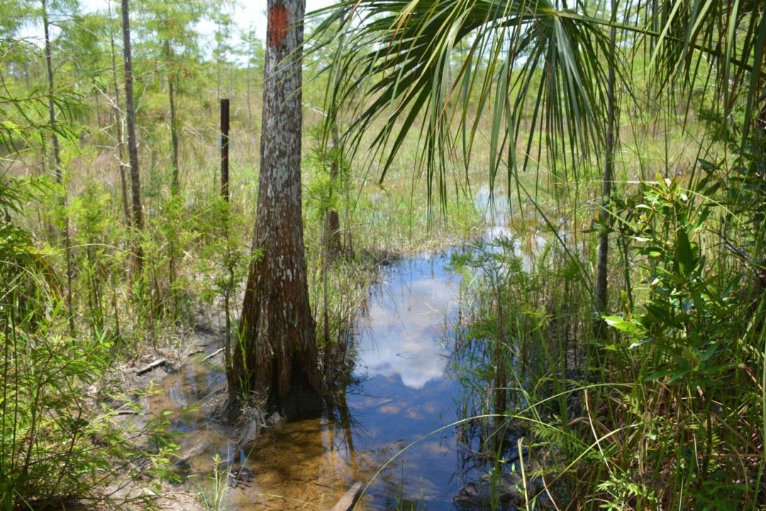 A creek runs through a green swamp and sparse trees.