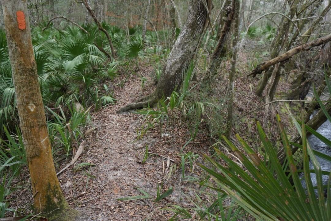 A trail runs through a green meadow and swamp.