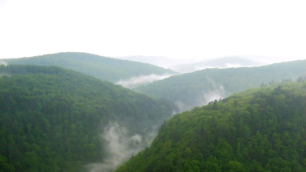 Fog covers green mountains in a view from Pennsylvania's Mid State Trail.