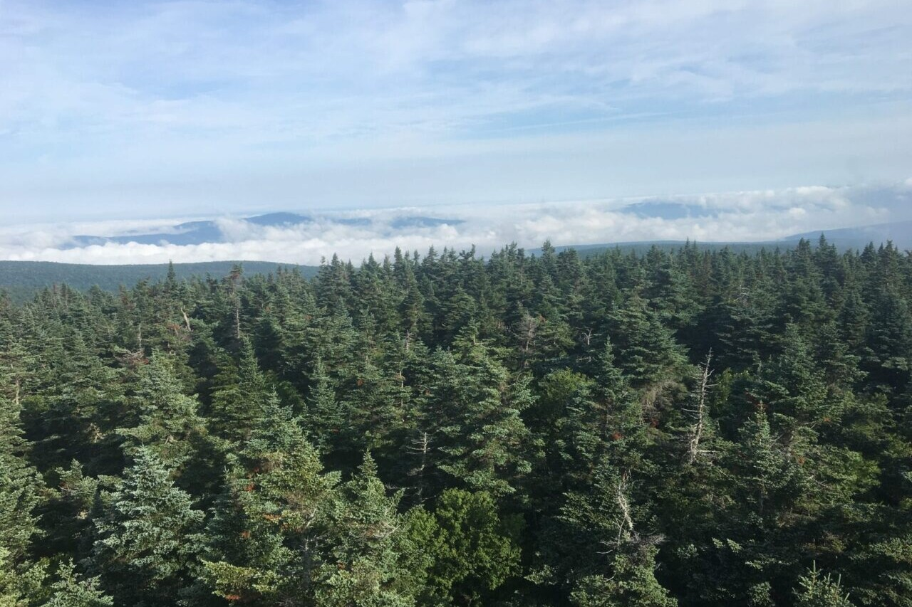 A view from a tower sows a vast forest of evergreen trees.