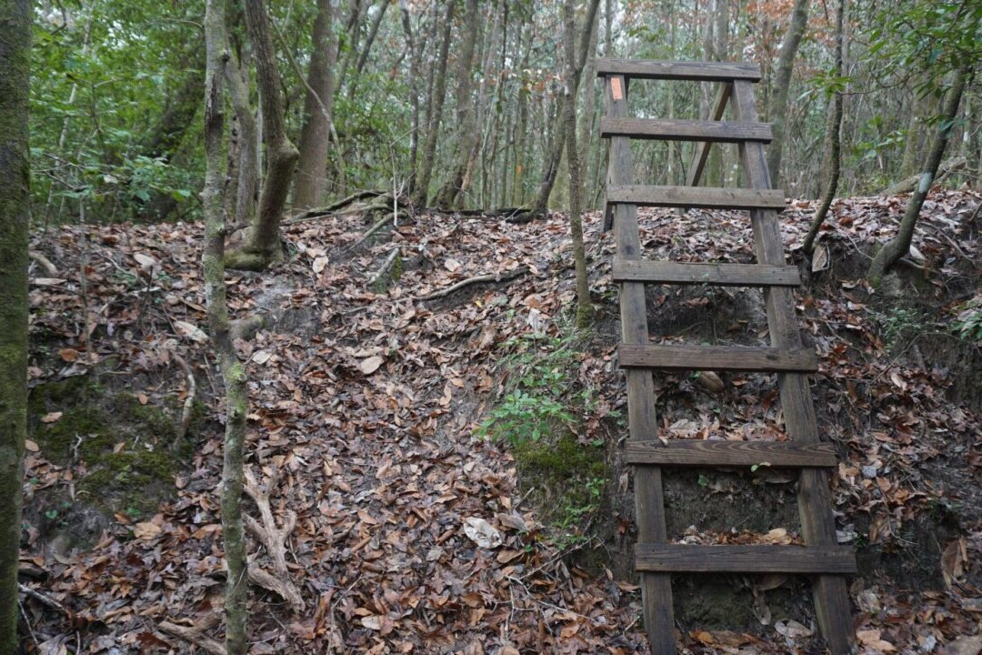 A ladder ascends a steep, leaf-covered embankment.