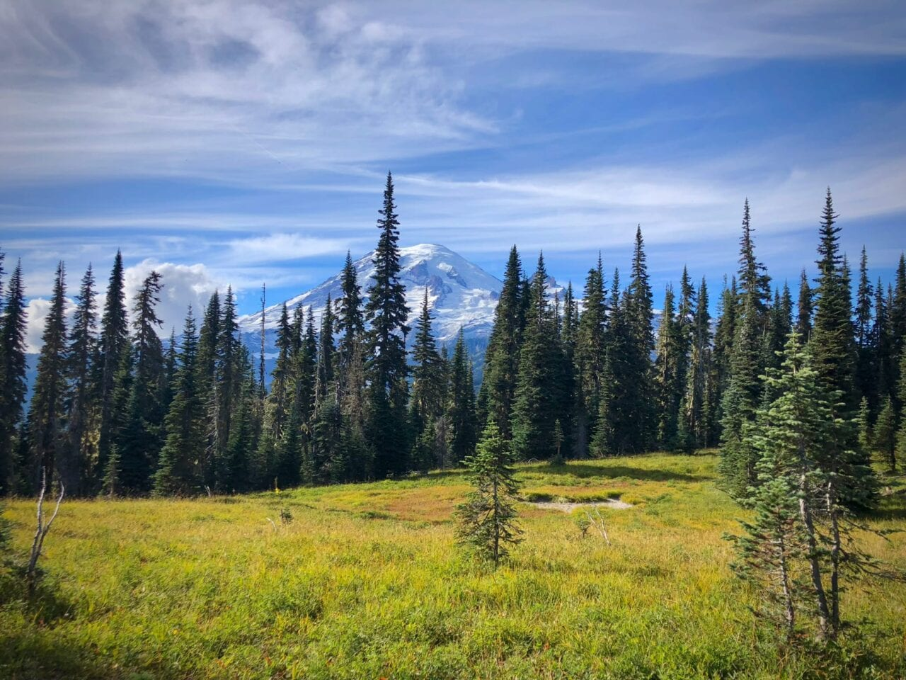 Mount Rainier is an imposing backdrop to a lush green meadow and stand of evergreens on the Wonderland Trail.
