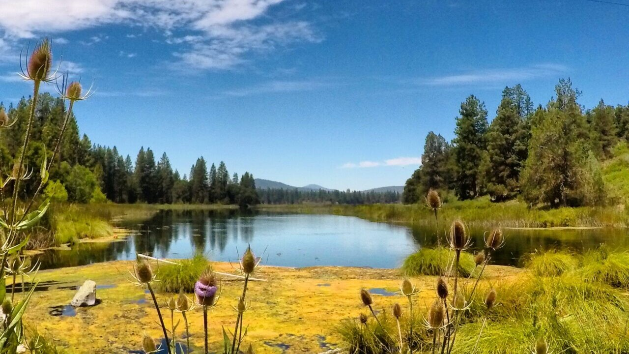 A beautiful view of a pond.