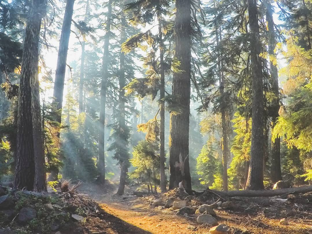 The sun shining through the forest.