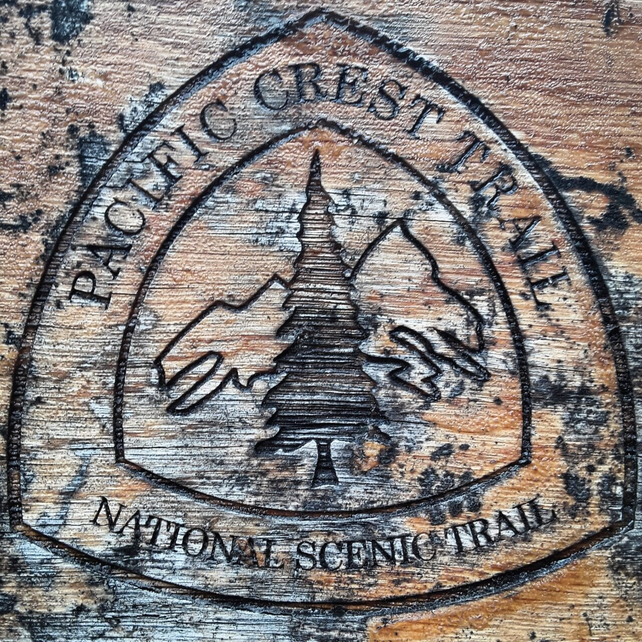 A Pacific Crest Trail sign on a tree.