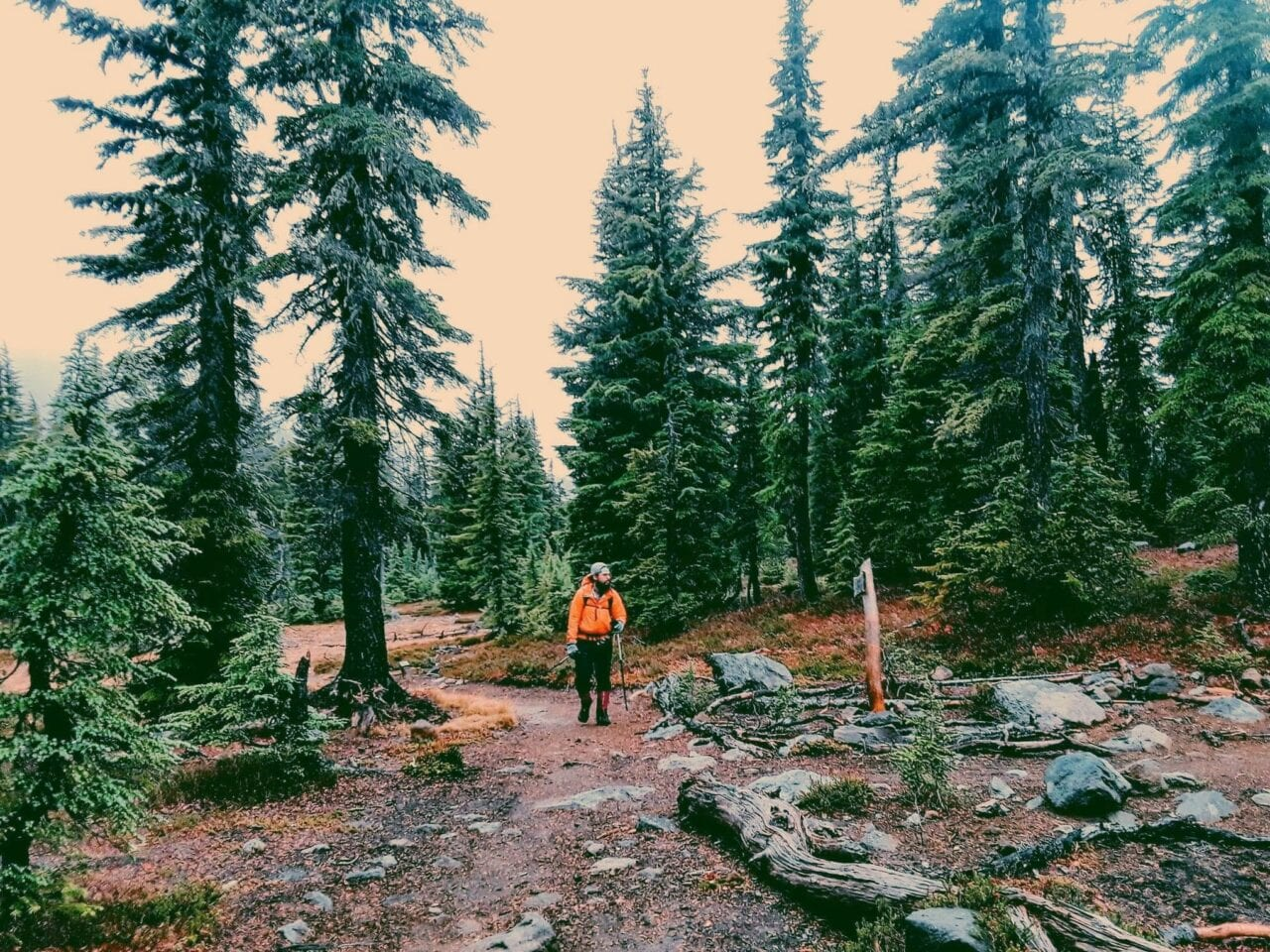 A hiker standing on the trail among the trees.