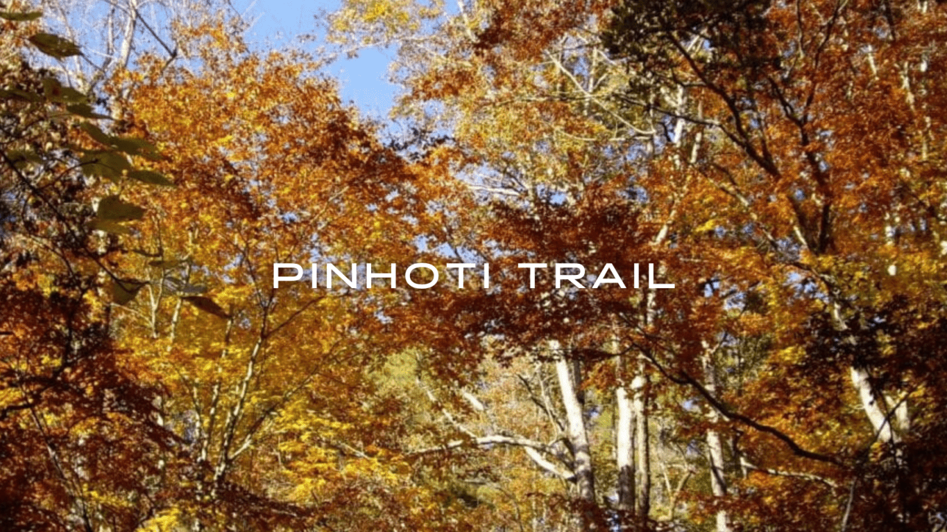 Sun and blue sky shine through fall colors of deciduous trees on the Pinhoti Trail.