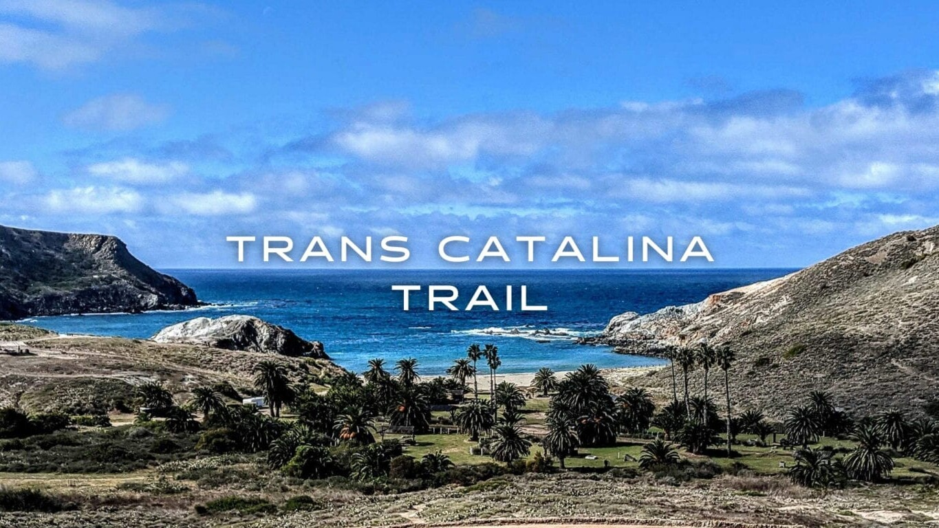 A beach in a cove with palm trees and hills surrounding the blue water and dried grass on the Trans Catalina Trail