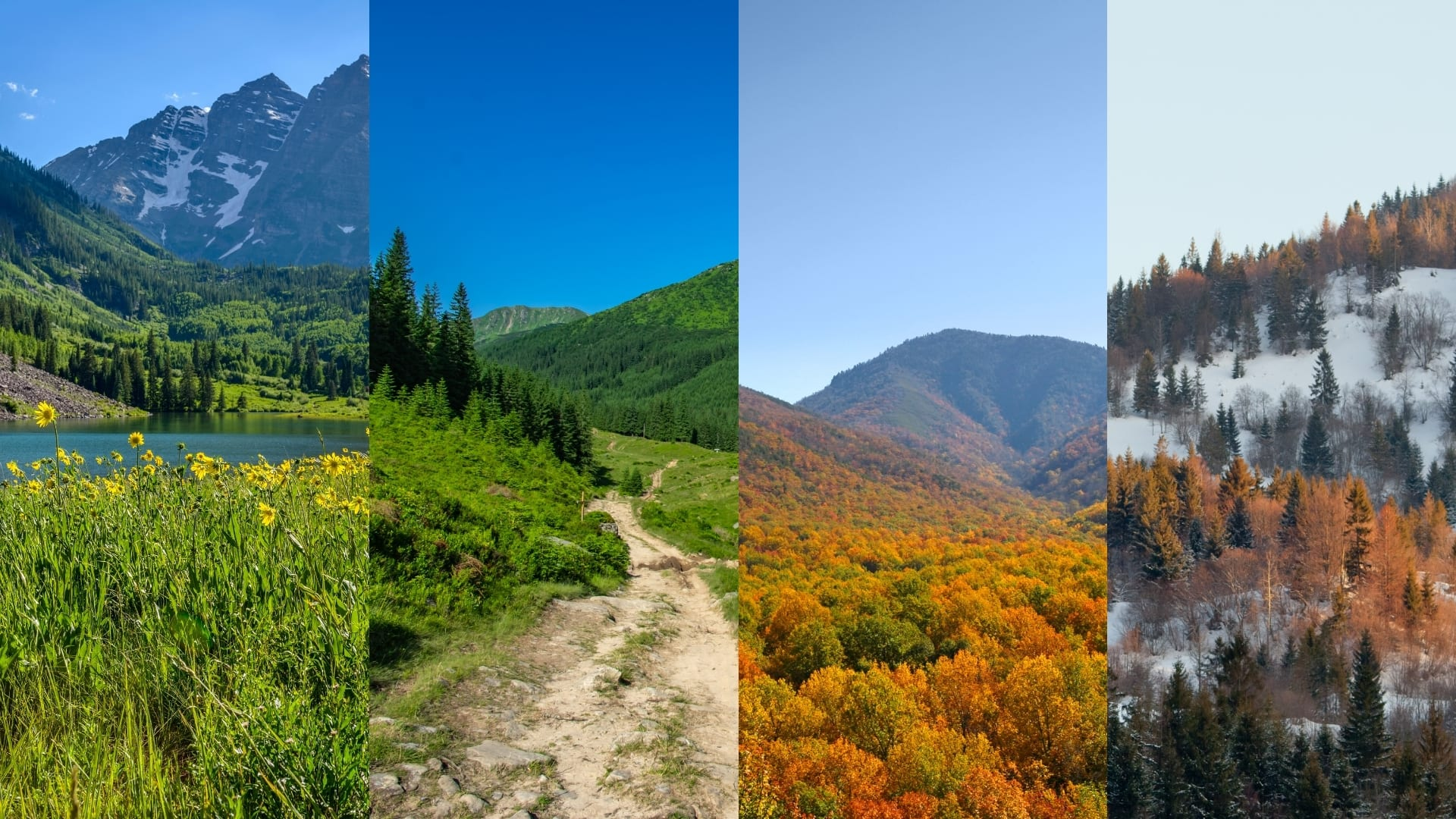 Four seasons, spring, summer, fall, and winter next to each other