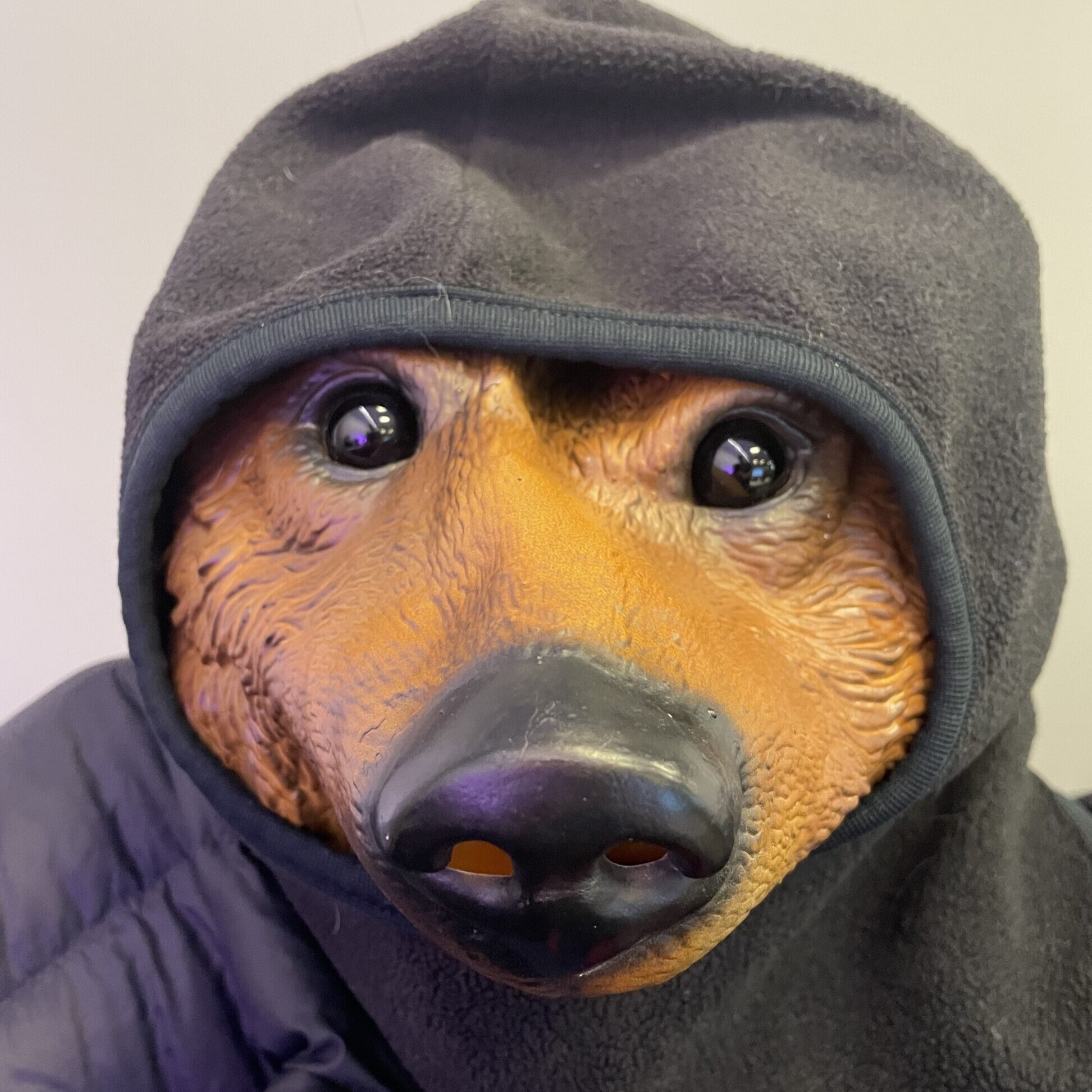 a hoodie on a bear costume